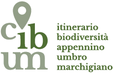 Logo Cibum