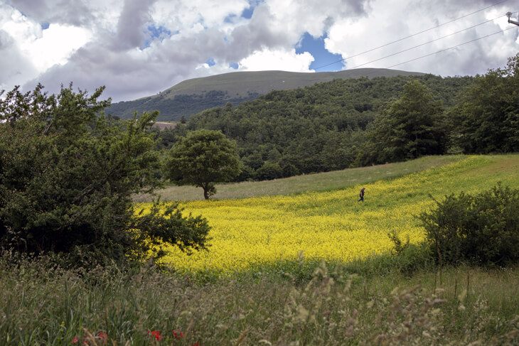 Azienda Agricola De Carolis Adelino