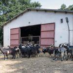 Azienda Agricola Reali Claudio