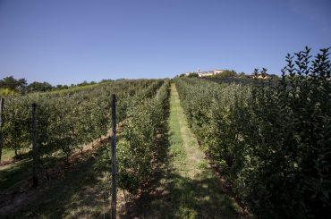 Società Agricola La Pietrara - veduta esterna