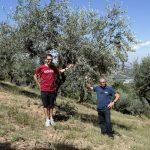 Azienda Agricola Franco Persicorossi - olivo