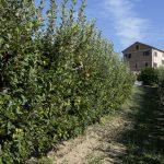 Azienda Agricola Gobbi - veduta esterna