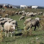 Azienda Agricola Michela Paris - bestiame