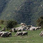 Azienda Agricola Michela Paris - paesaggio e bestiame
