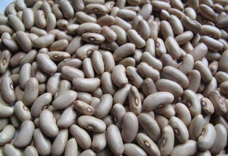 Gray bean