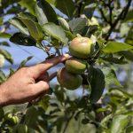 Società Agricola La Pietrara - risorsa